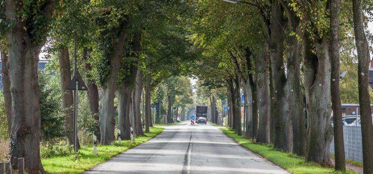 Die Chaussee Altona-Kiel – Eine grüne Lebensader für Schleswig-Holstein