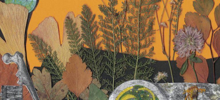 Herbstflora im Spiegel von Mythologie und Volksglaube