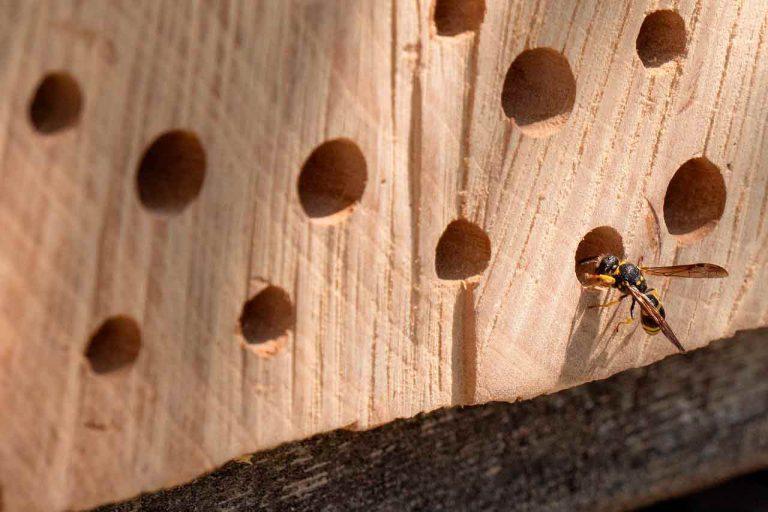 Nisthilfen für Wildbienen: 12 Tipps